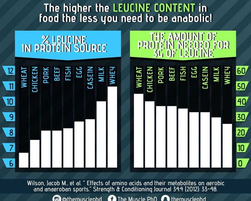 game-changers-leucine
