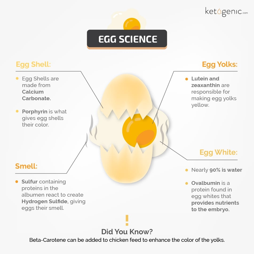 Egg_Science- facts