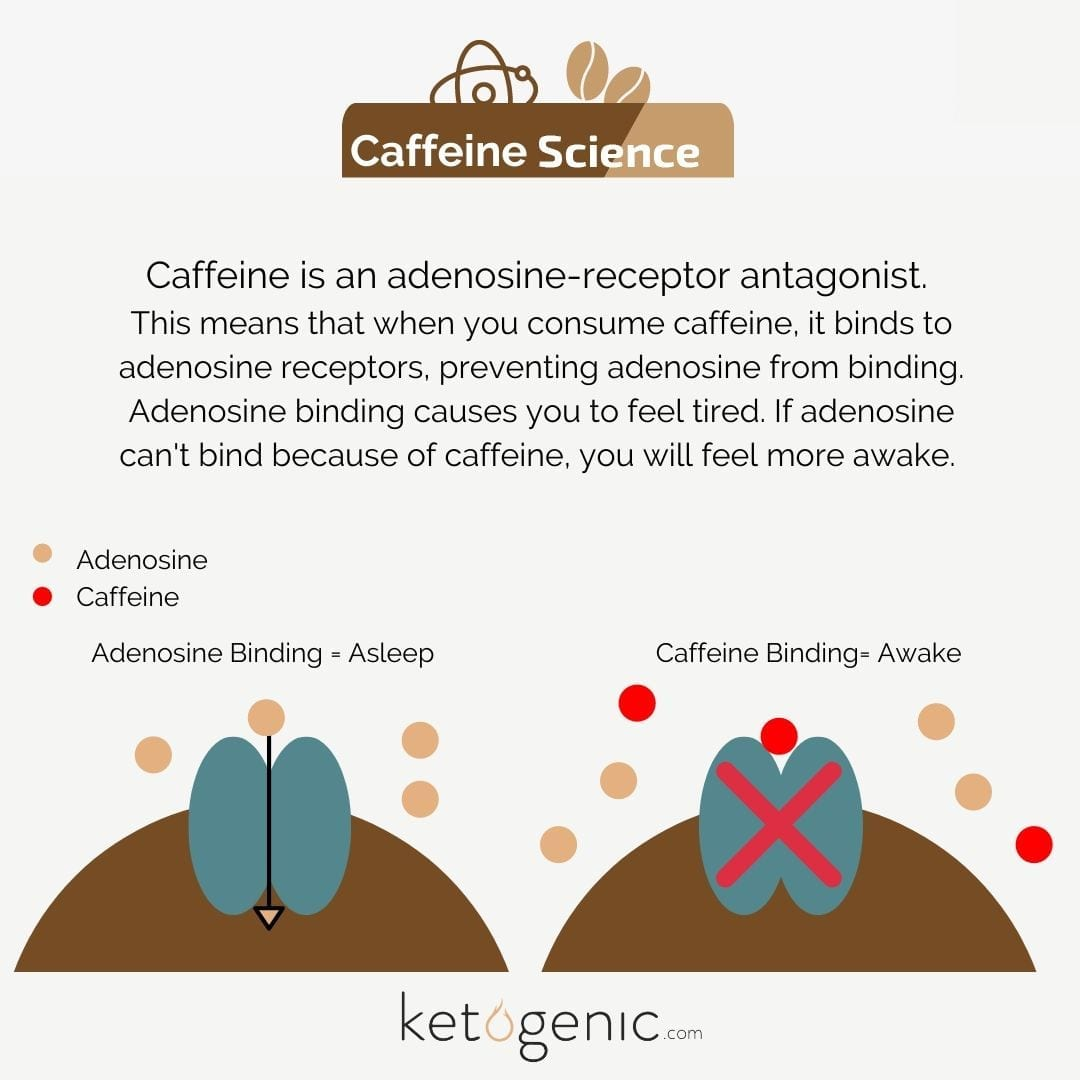 caffeine science
